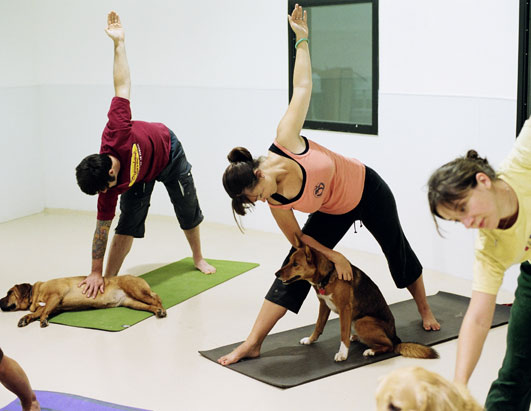 Yoga for Cats, Yoga for Dogs:  Reflection on Contemporary Yoga Practice