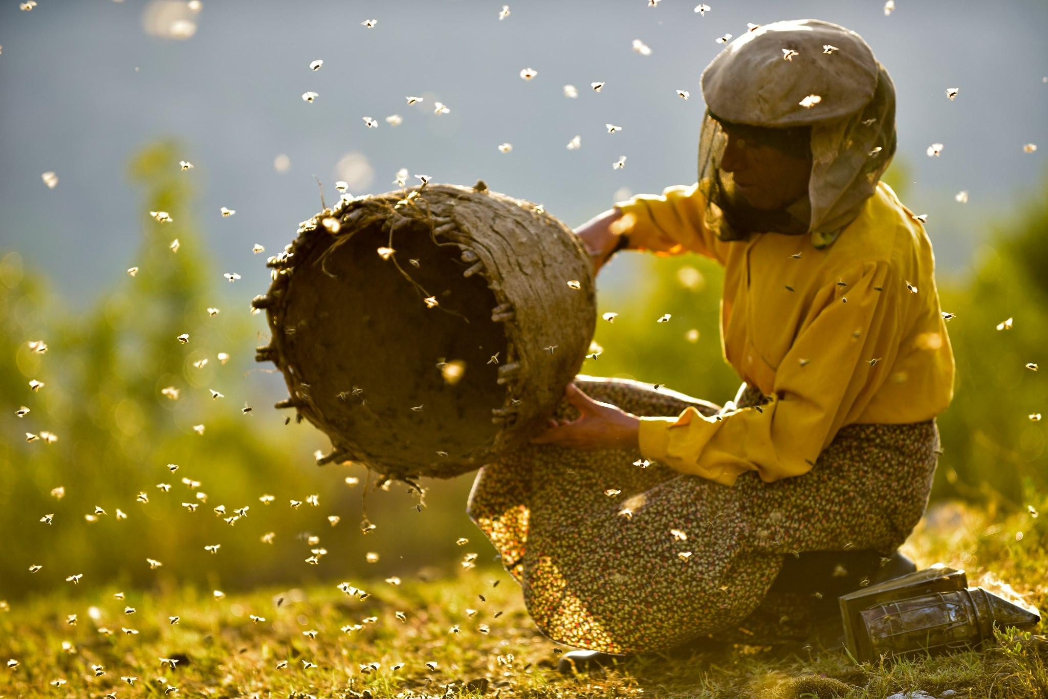 Film: Honeyland