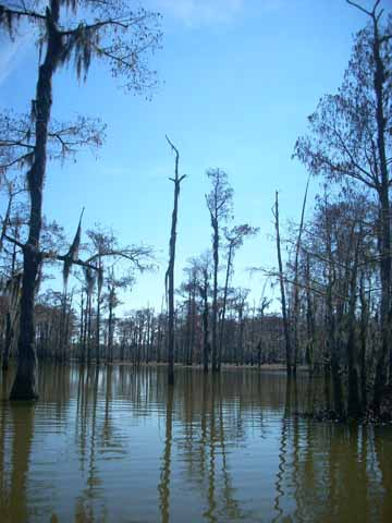 UT students and faculty carry out a field trip to the Lower Mississippi Valley and Delta.
