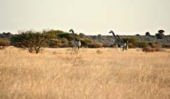 Kalahari Desert of Botswana