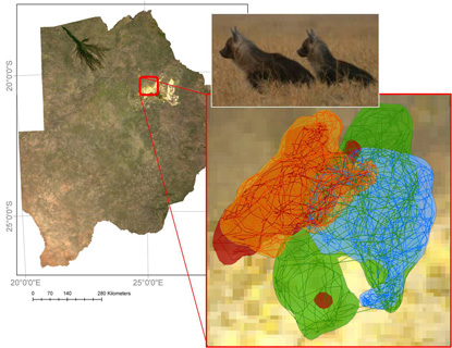 Study area in Northern Botswana; Simulated movement trajectories for two pairs of hyenas in their respective ranges