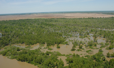 Sedimentary effects of floods along the Lower Mississippi
