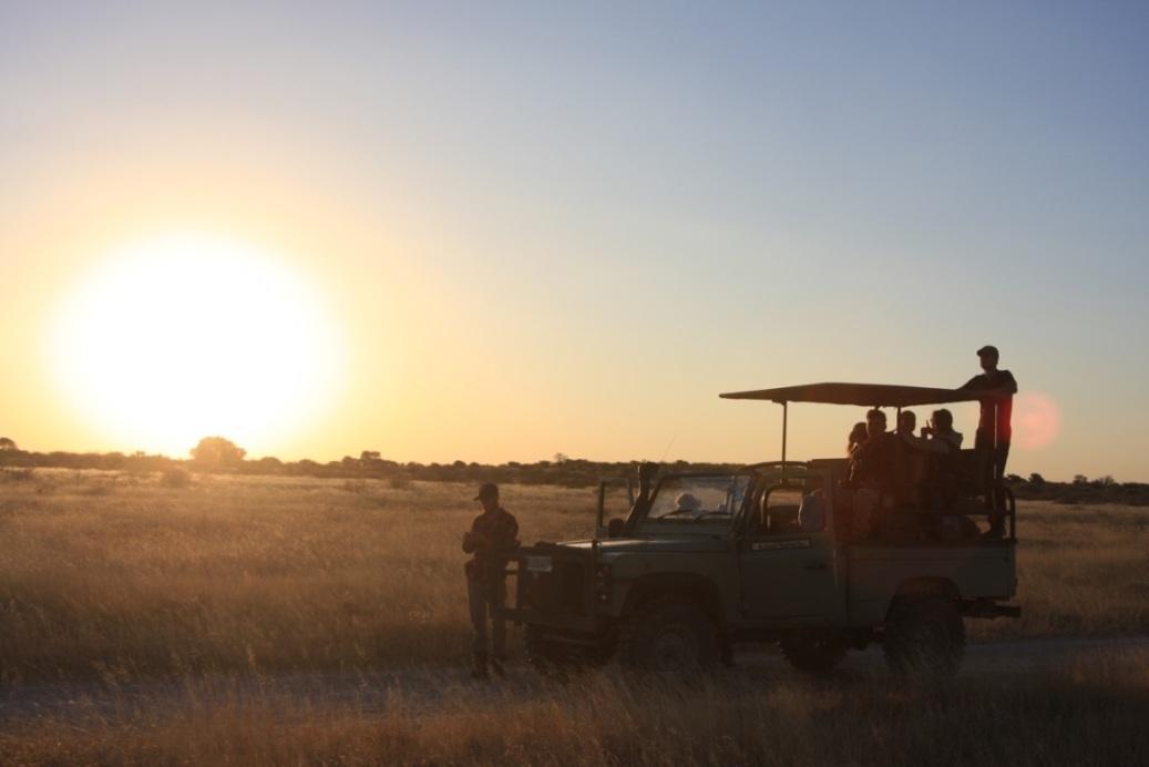 Longhorns in the Kalahari