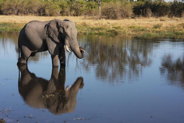 Kalahari Summer Study Abroad Program Continues