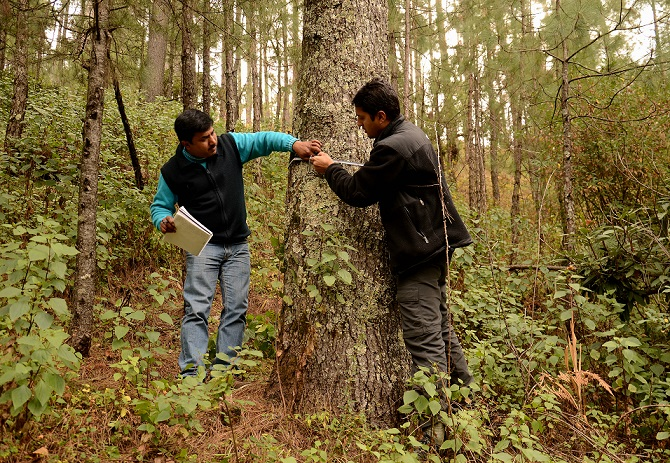 Niti B. Mishra (R) measures vegetation physiognomic properties in the plot of the study area.