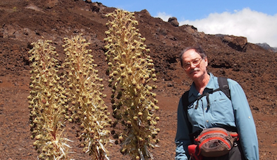 In the Field with Dr. Pérez: Silversword Plants in the Haleakalā Crater