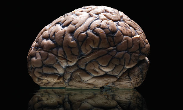 Brain Specimens were Disposed of by Environmental Workers in 2002