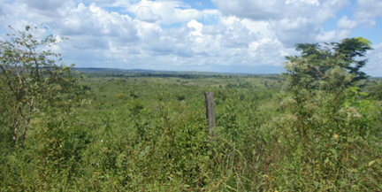 Formerly planted pastures, now in early process of native vegetation regeneration. Photo Credit: E. Arima