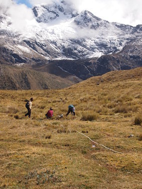 Measuring attributes of vegetation and soils in the high Andes of Peru, summer 2014