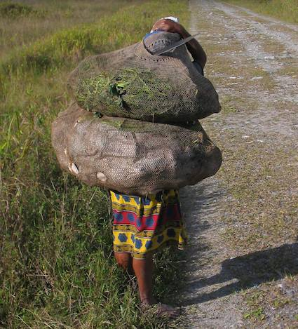 A woman walking in Waria Valley carries heavy bilum (string bag) filled with potatoes and other vegetables. Photo by Dan Jorgensen.