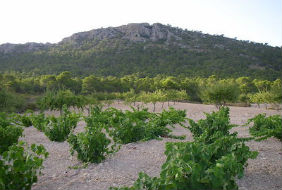 Mountains, Geomorphology, and Viticulture in Southern Spain