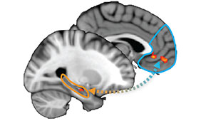During learning, the hippocampus (orange), in concert with prefrontal cortex (blue), builds conceptual knowledge for a given goal. When goals change, new learning in HPC and PFC updates knowledge..