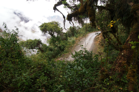 View from within montane forest overlooking road in the southern Peruvian Andes