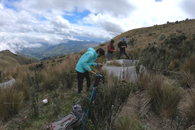 Sisimac Duchicela with Ecuadorian collaborators installing an open-top chamber in the Yanacocha Reserve on the Pichincha Volcano in Ecuador